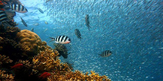 fish-caught-in-malta