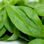 Frersh Spinach Malta