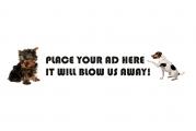 IPOP Online Marketing