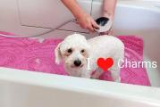 Charms Pet Grooming Salon